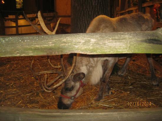 Alabama Constitution Village : Which Reindeer is this?