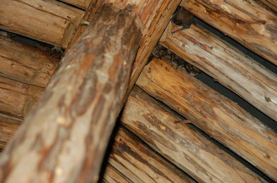 Logger's Life Provincial Museum: Bats
