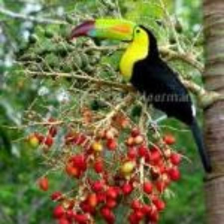 Super Palm Resort: Make us your next visit to Belize