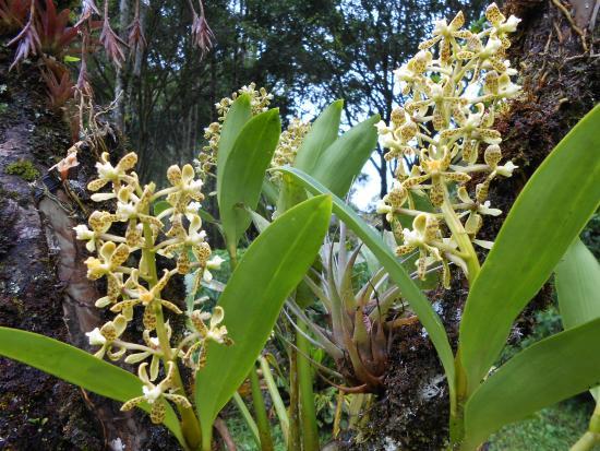 Hosteria Pequeno Paraiso: Beautiful orchids in the garden of Pequeno Paraiso