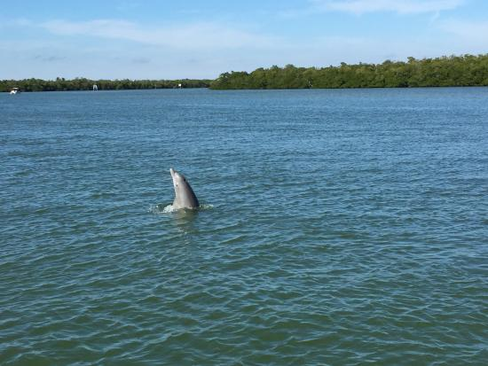 Estero Bay Express Dolphin & Sunset Boat Tours: Playing dolphin