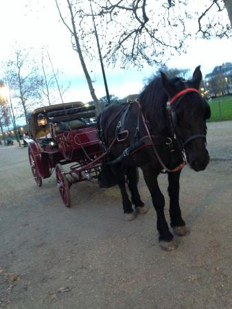 Experience Paris - Guided City Tour: horse and cart