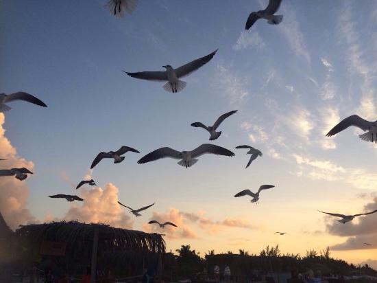 Casa Iguana Holbox: Fuera de Casa Iguana a la orilla de la playa