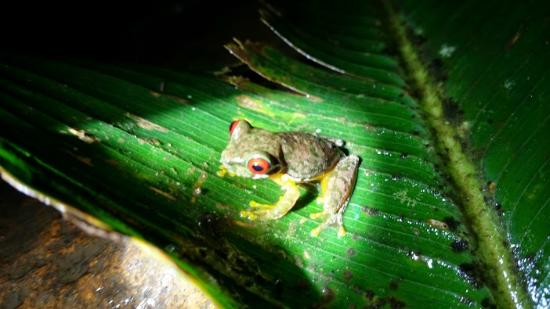 Monteverde Night Walk Costa Rica : Hector made sure to take close-up pictures for everyone
