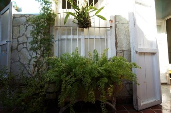 Casa Nivia Melendez: Just Some of the Greenery