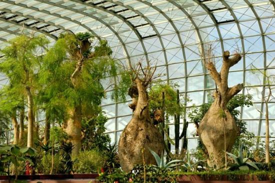 Gardens By The Bay: Bottle Trees At Flower Dome