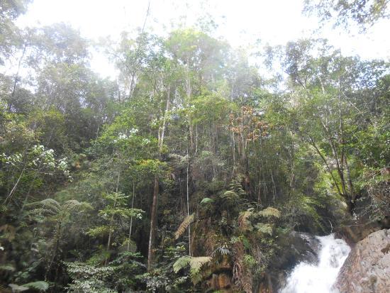 Jeriau Waterfall: Canopy Spread around the falls