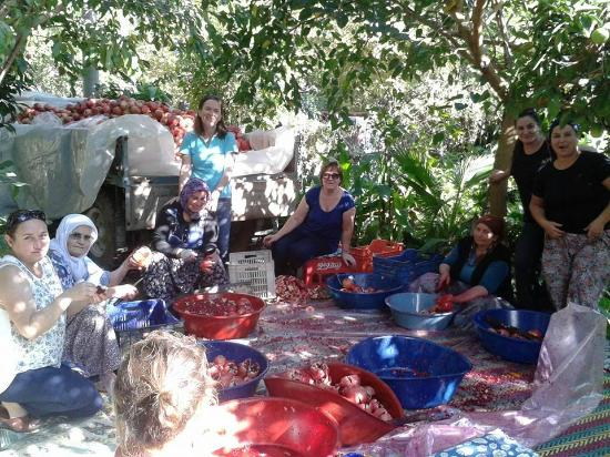 Hotel Gelidonya Adrasan: Hotelin içinde buluduğu nar bahçesinde, nar ekşisi yapımı