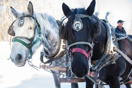 Ontario's Highlands, แคนาดา: Sleigh ride at Fulton's