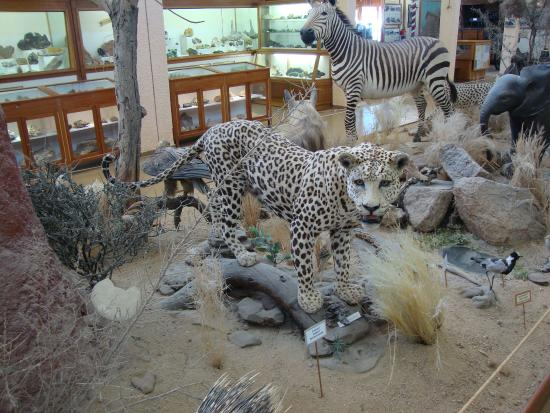 Museo de Swakopmund: животные пустыни