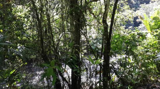 Rio Tico Safari Lodge: River view!