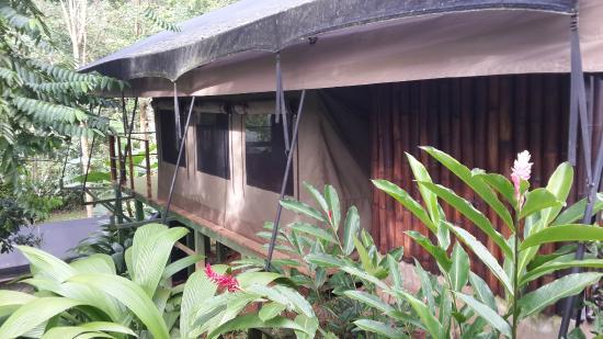 Rio Tico Safari Lodge: Our jungle home