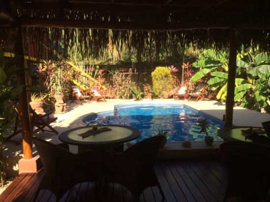 Samara Palm Lodge : View of the pool from the poolside lounge