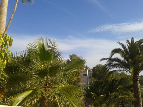 Villa Altea: view from the terrace, gorgeous palm trees in their garden...