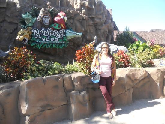 Disney Springs Rainforest Cafe Booking