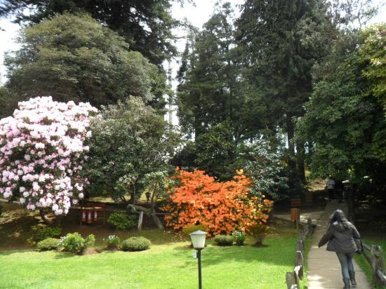 Floreado picture of jardin botanico de la universidad for Botanico jardin