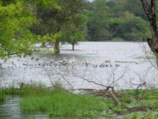 Buduruwagala Temple: Waterbird santuary