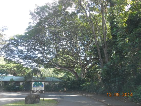 Waimea Arboretum and Botanical Garden: amazing trees