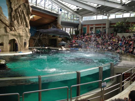Dolphin show Picture of Zoo Duisburg Duisburg TripAdvisor