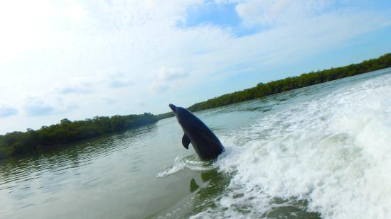 Capt. Ron's Awesome Everglades Adventures : Dancing dolfin