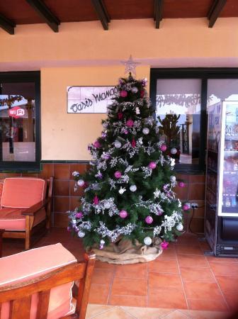 LABRANDA Oasis Mango: Christmas tree reception area