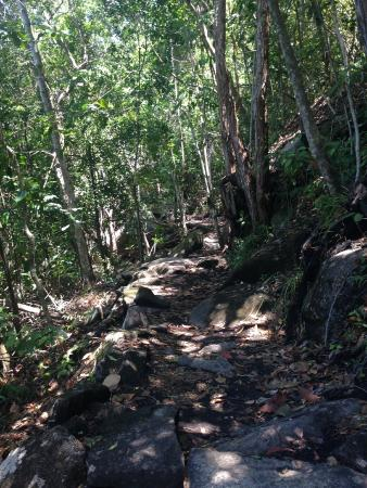 Fitzroy Island National Park: Hike into the woods to get to Nudey Beach - challenging if wearing slippers