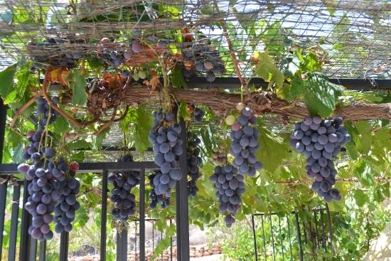 Grapes From Our Own Vines Enjoy For Breakfast Picture Of La