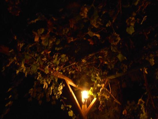 Bodamya Tepe Restaurant: Hanging gardens