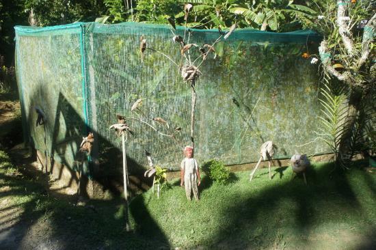 Siquijor Butterfly Sanctuary : Anlage von aussen