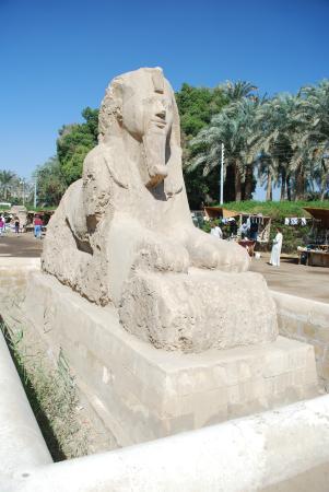 Memphis Museum: Giant Sphinx