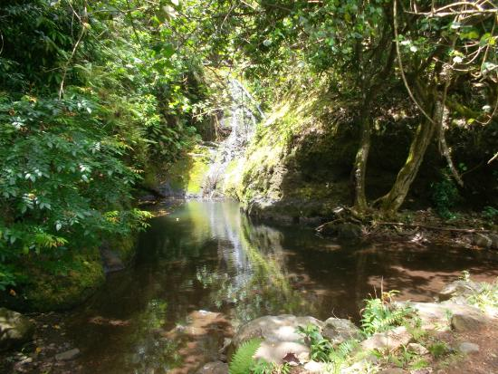 Wigmore's Waterfall: Waterfall after rain he day before