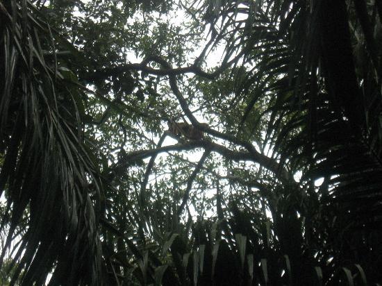 Matogrossense Wetlands National Park : pantanal