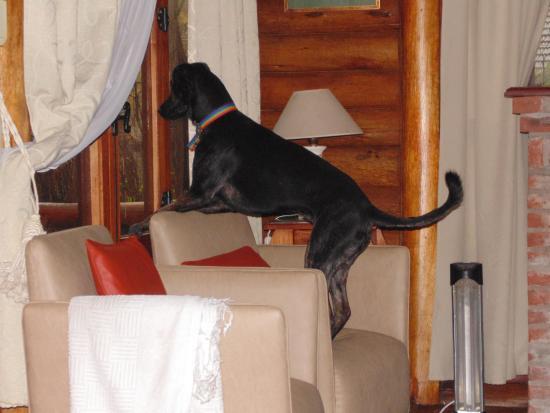 Puerto de Palos Cabañas & Suites: jajajaja mi perra mirando par afuera