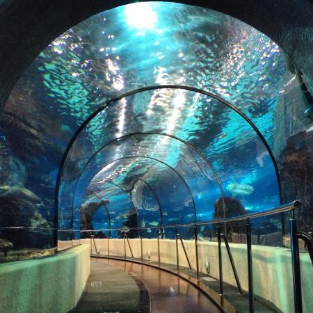 T nel picture of l aquarium de barcelona barcelona for Aquarium de barcelona
