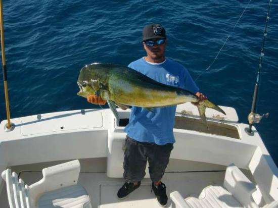 Swordfish picture of el budster salvador 39 s for Cabo san lucas fishing charters prices