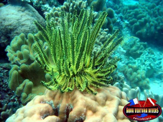 49ef58026b Nice color - Picture of Aqua Ventura Divers