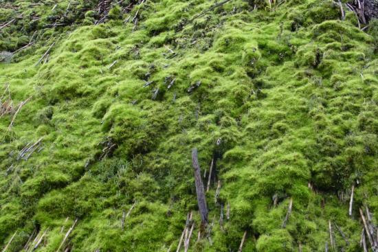 Arihara Village: 茅葺屋根に生える見事な苔