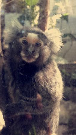 Refugio Herpetologico de Costa Rica: Mono refugio herpetologico