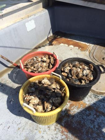 JP's Wharf: Fresh Delaware Bay Oysters caught by JP's seamen