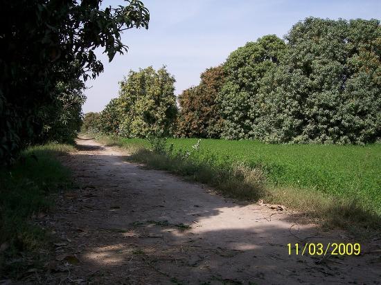 Shahdadpur照片