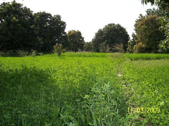 Shahdadpur