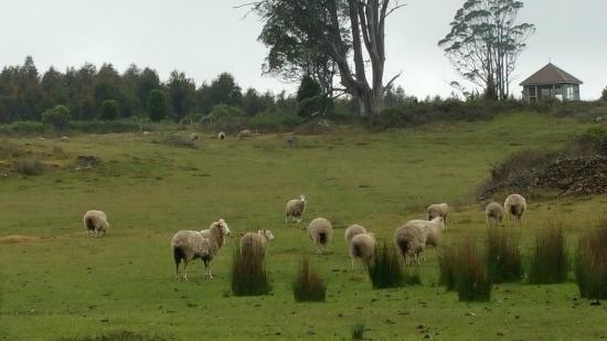 AAA Granary Accommodation: Sheep came to say hi!