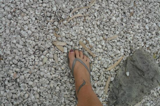 Joal Fadiout : tout le village repose sur 2 m de coquillages