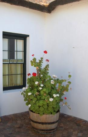 Aan De Doorns Guest House: Splendid pelargoniums