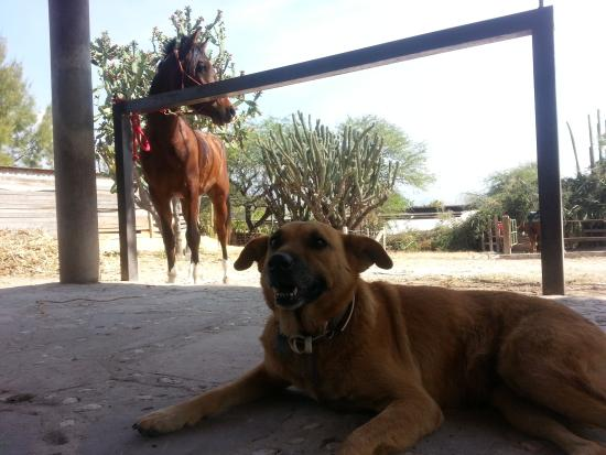 Horseback Mexico: dogs and horses! what more could you need?!