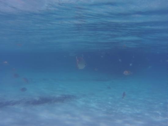 Melia Vacation Cozumel Golf - All Inclusive: faune aquatique