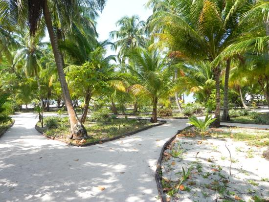 IZE Belize: Grounds at SWC