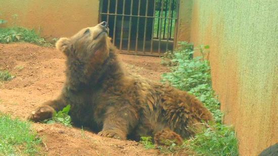 Parque Zoologico : Urso marrom