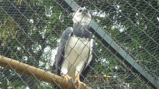 Parque Zoologico : Harpia