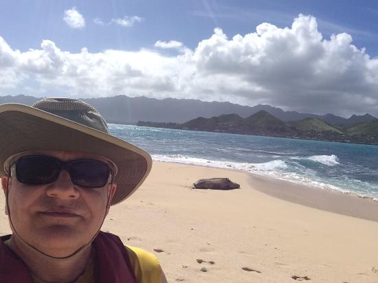 Kailua, HI: Sea lion on the beach